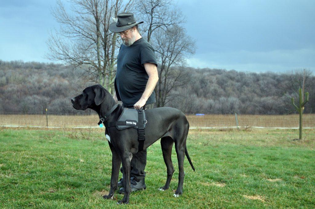 Foster a future service dog through the Austin Dog Alliance.